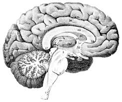 Do You Know About Cerebral Small Vessel Disease?